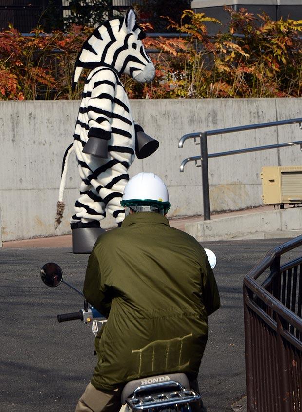 Zebra and keeper